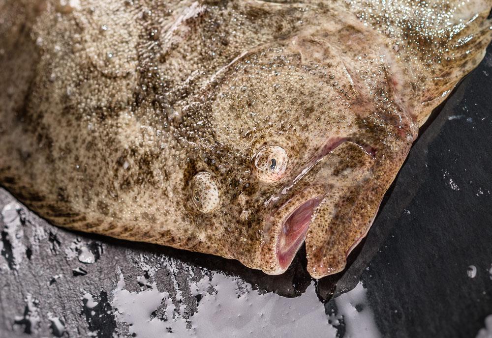 food-ruegen-produkt-foto-pocha-burwitz